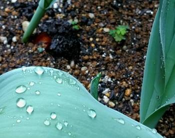0424雨滴.jpg