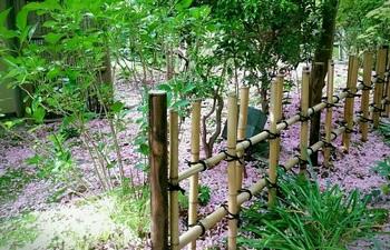 0429桜茶屋5.jpg